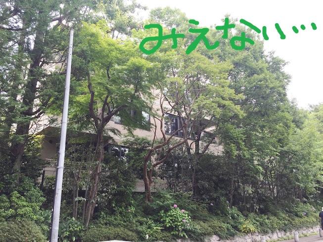 IMG_7254[1]