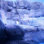シーパラに行ってみた! ~クレヴィア金沢八景THEBAY竣工しました!~ 【マンションマニア】