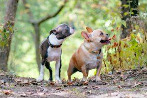 子犬が2匹のマンション探し