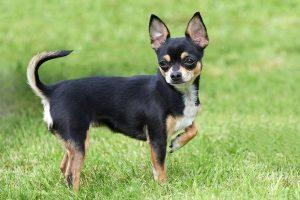 ペット用フロアコーティングと臭い対策について