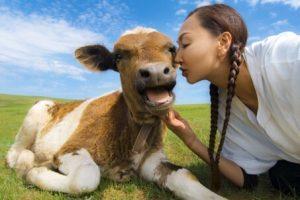 女性と子牛