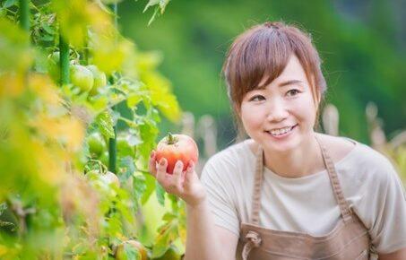 トマトを栽培する女性